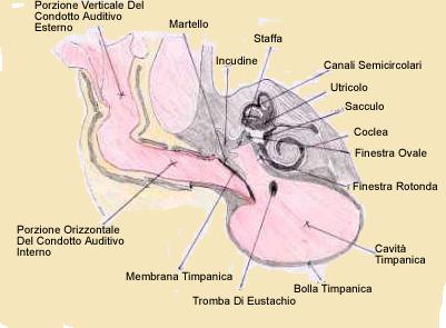 Otite esterna causata da condotto uditivo a L