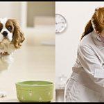 L'alimentazione del cane cardiopatico