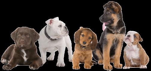 Cuccioli di razza diversa, ogni razza può manifestare le proprie malattie dei cani di razza.