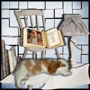 cucciolo di Cavalier king che dorme sul letto