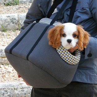 Cucciolo a passeggio dentro una borsa per cani