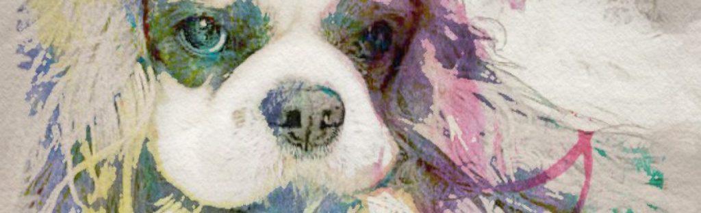 Cavalier King, in primo piano gli occhi che possono essere affetti da oculopatie di origine genetica