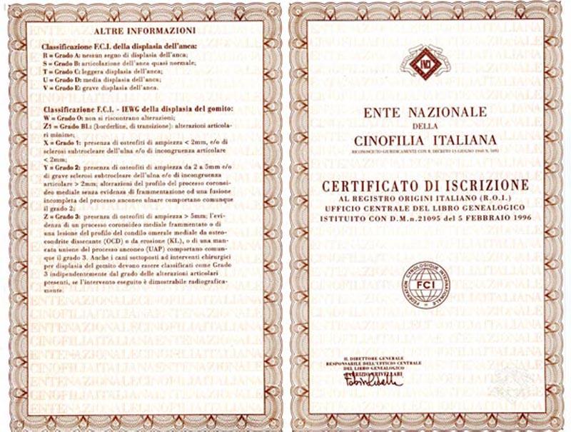 Fronte-retro del certificato genealogico ( pedigree)