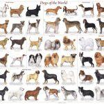 Malattie dei cani di razza…diceria o realtà?