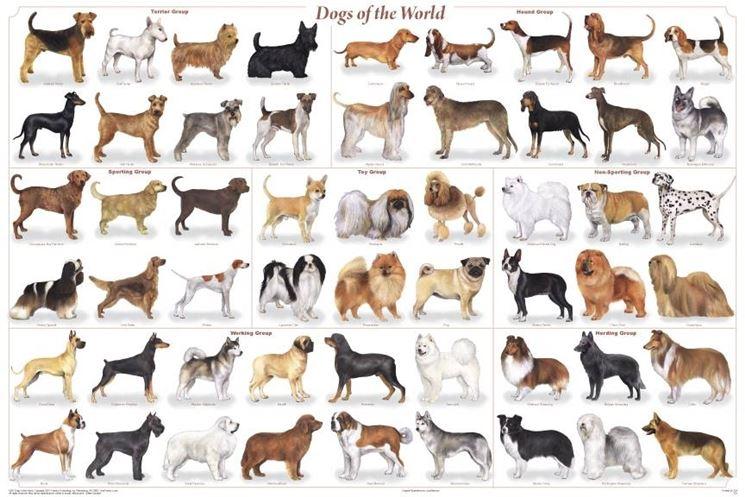 Elenco razze cani, ogni razza ha le proprie malattie dei cani di razza