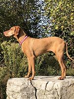 cane deceduto per la tossicità dello xilitolo