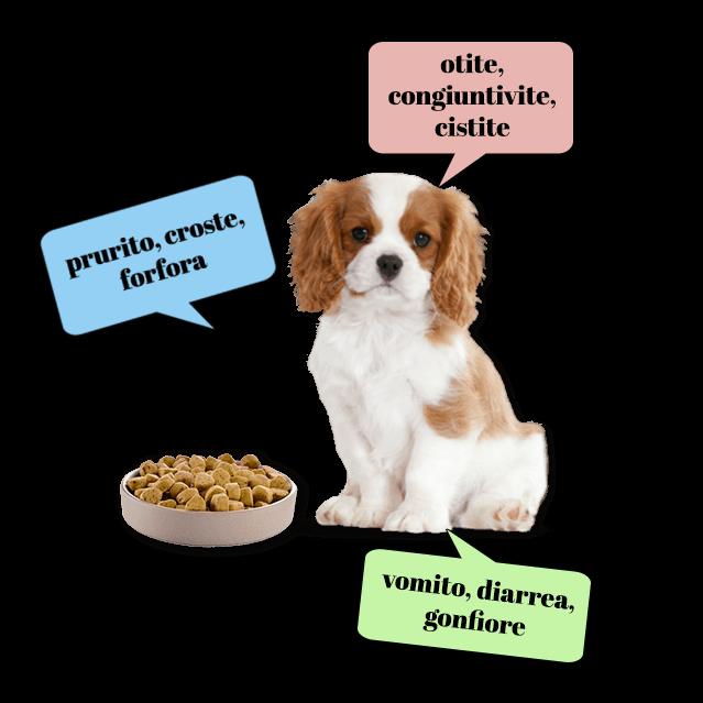 Sintomi delle intolleranze alimentari nel cane
